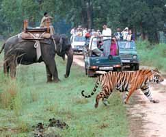 Honeymoon In Ranikhet